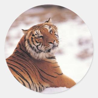 Reclining Tiger Classic Round Sticker