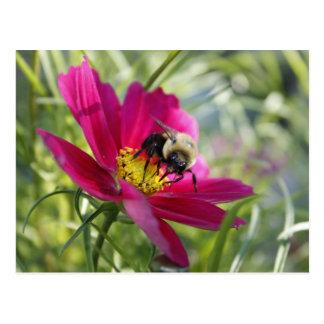 Recogida del polen postal