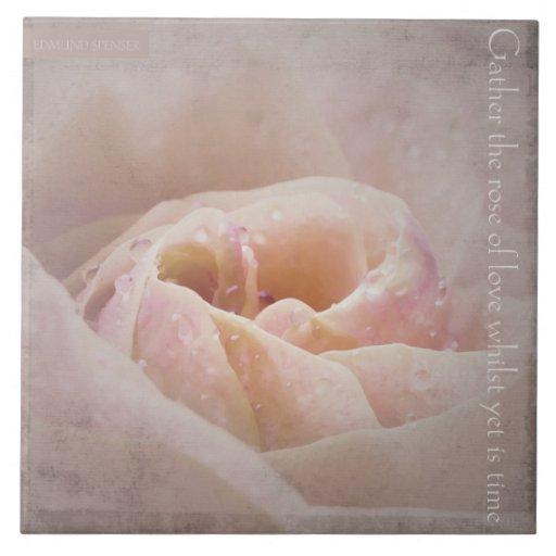 Recolecte el color de rosa del amor, teja