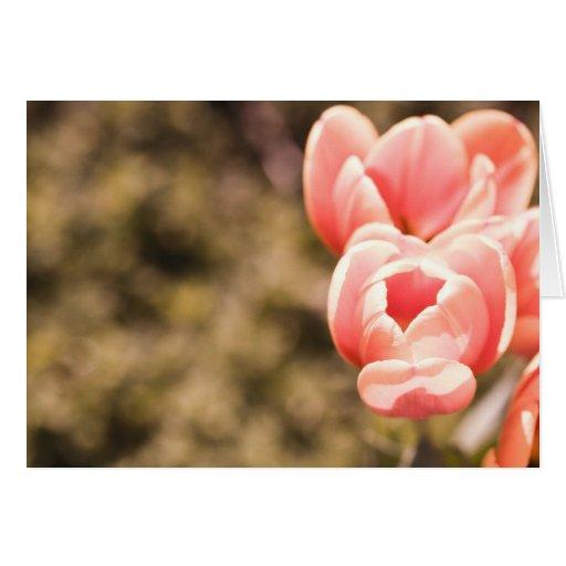 Recordar la primavera felicitacion