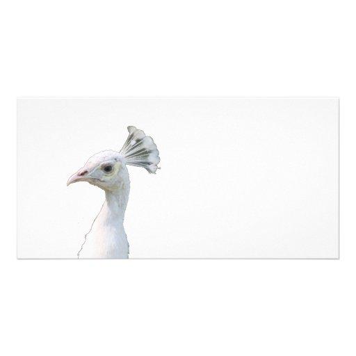 Recorte blanco de la cabeza del pavo real del albi plantilla para tarjeta de foto