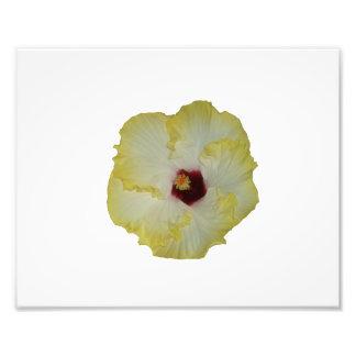 Recorte rojo amarillo de la floración del hibisco impresion fotografica