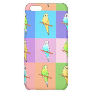 Rectángulos del arco iris del Parakeet