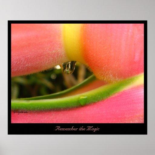 Recuerde la impresión del poster de Heliconia de l