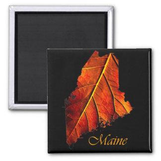 Recuerdo del imán del regalo de Maine