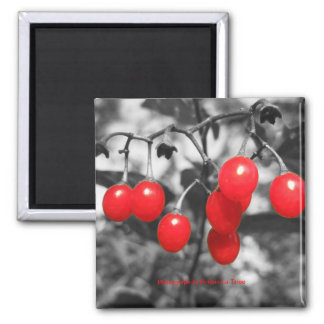 Red 2 Inch Square Magnet
