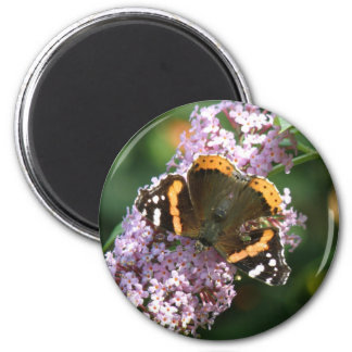 Red Admiral Butterfly and Buddleia Magnet