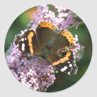 Red Admiral Butterfly and Buddleia Stickers