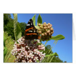 Red Admiral butterfly Cards