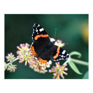 Red admiral butterfly custom flyer