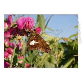 Red Admiral Butterfly On Sweet Peas Card