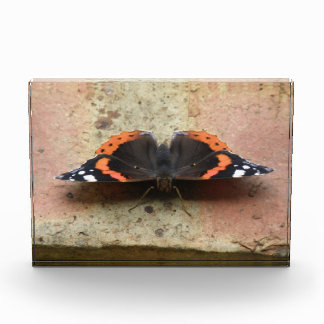 Red Admiral Butterfly Photo Block