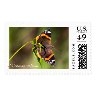 Red Admiral butterfly Postage Stamp