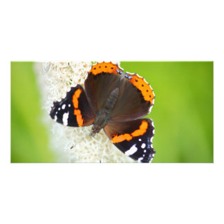 red admiral card
