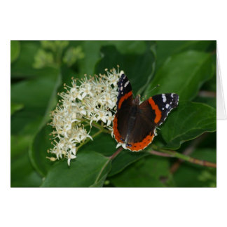 Red Admiral on Dogwood Card