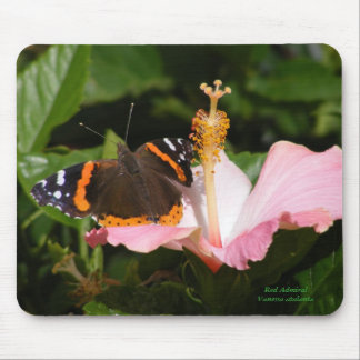 Red Admiral on Hibiscus Mouse Pad