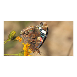 red admiral on yellow flower card