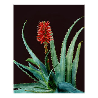 Red Aloe Cactus Poster