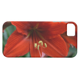 Red Amarylis iPhone 5 Cases