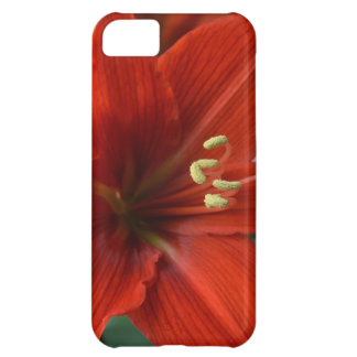 Red Amarylis Cover For iPhone 5C