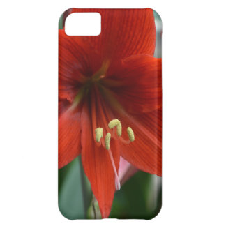 Red Amarylis iPhone 5C Covers