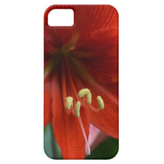 Red Amarylis iPhone 5 Case