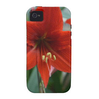 Red Amarylis Case-Mate iPhone 4 Case