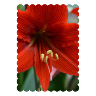Red Amarylis 5x7 Paper Invitation Card