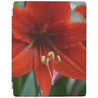 Red Amarylis iPad Cover