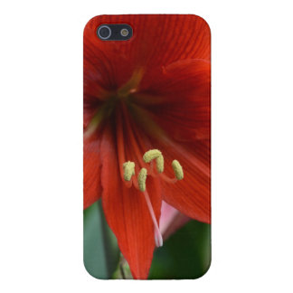 Red Amarylis iPhone 5 Cover