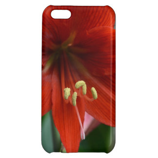 Red Amarylis Case For iPhone 5C
