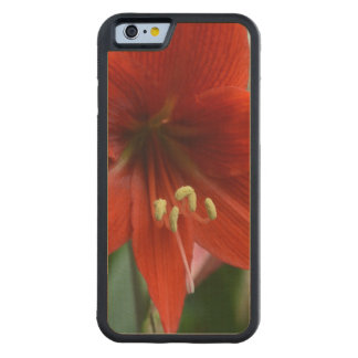 Red Amarylis Carved® Maple iPhone 6 Bumper