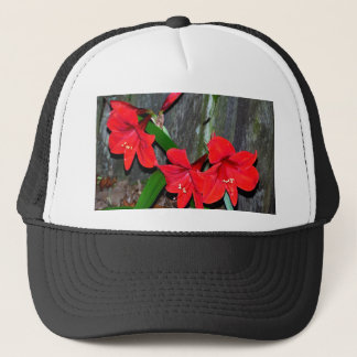 Red Amaryllis By An Old Fence Trucker Hat