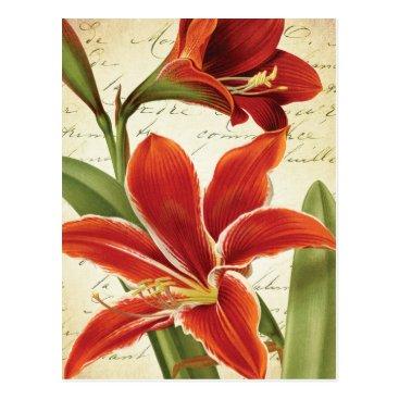Christmas Themed Red Amaryllis Christmas Flower Botanical Postcard