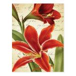 Red Amaryllis Christmas Flower Vintage Botanical Postcard