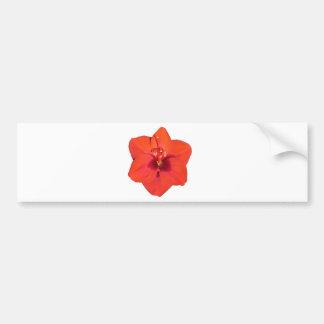 Red Amaryllis Flower Bumper Sticker