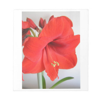 Red Amaryllis Flower Picture Memo Notepad