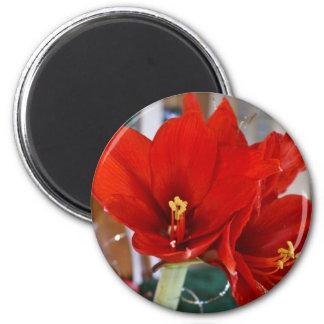Red Amaryllis Magnet