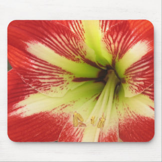 Red Amaryllis Mouse Pad
