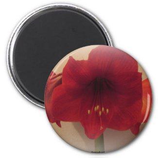 Red Amayrillis Magnet magnet
