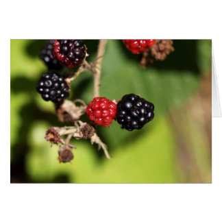 Red and black blackberry fruits. card