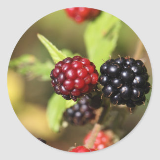 Red and black blackberry fruits. classic round sticker