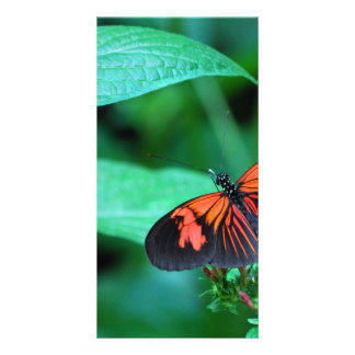 Red And Black Butterfly Card