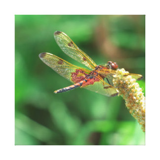 Red and black dragonfly with green leaf background canvas print