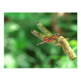 Red and black dragonfly with green leaf background postcard