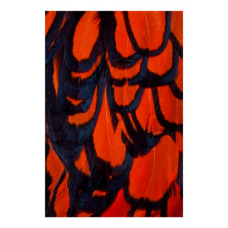 Red And Black Feather Abstract Poster