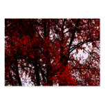 Red and Black Large Business Cards (Pack Of 100)