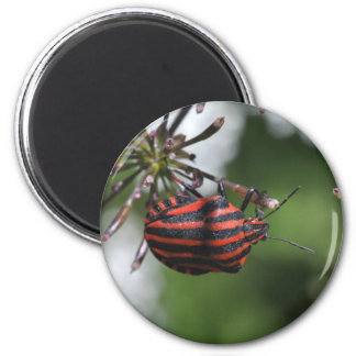Red and black striped bug magnet