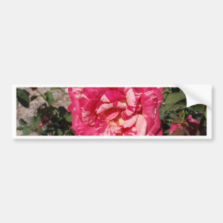 Red and Cream Rose Bumper Sticker