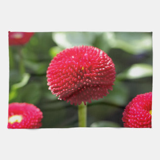 Red and filled cultivated daisies in a garden. kitchen towel
